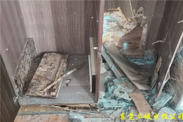 东莞塘厦白蚁防治站|塘厦白蚂蚁防治研究所