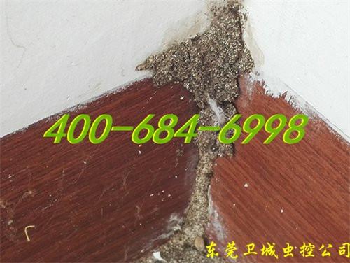 东莞白蚁的习性和防治对策丨东莞塘厦防治白蚁公司
