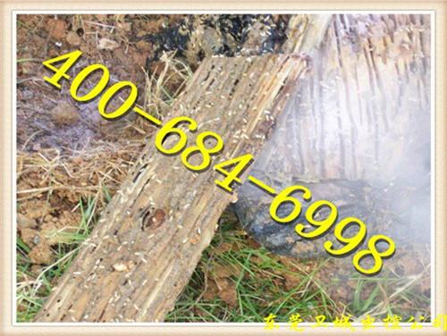 高埗白蚁防治中心,高埗灭白蚁,高埗白蚁预防