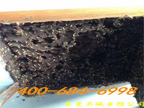 东莞茶山白蚁防治公司-告诉你白蚁常见危害部位有哪些?