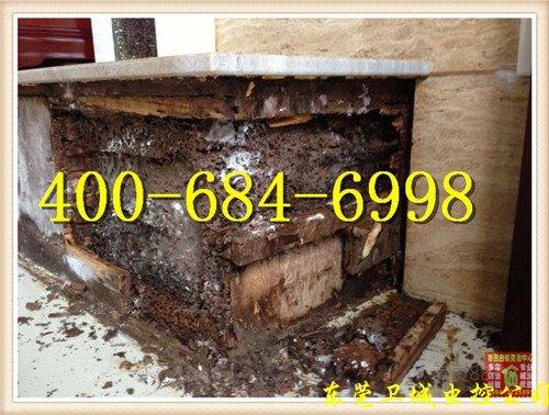 惠州白蚁防治公司,惠州灭白蚁,惠州白蚁公司