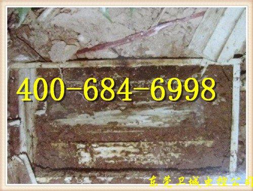 惠州三栋白蚁防治公司,三栋灭白蚁,三栋白蚁预防
