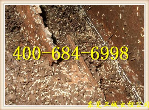 惠州白蚁防治所︱惠州水口镇白蚁防治︱正规水口白蚁灭治专家