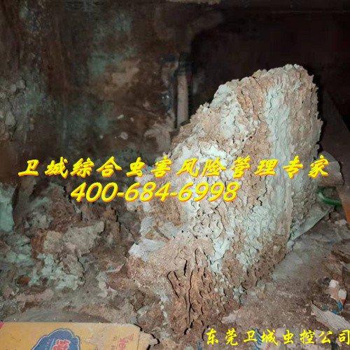 惠州白蚁公司|秋长白蚁防治|惠阳灭白蚁|淡水白蚁消杀所