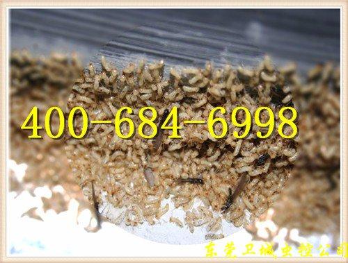 博罗白蚁防治|博罗防治白蚁公司