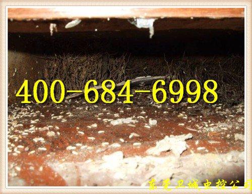 增城石滩白蚁防治|石滩灭除白蚁|石滩白蚁公司