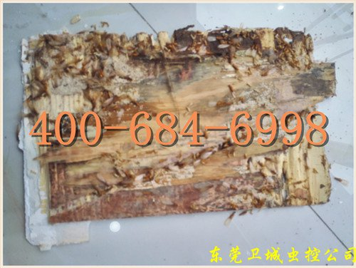 广州萝岗白蚁防治站,萝岗除四害,萝岗灭杀白蚁公司