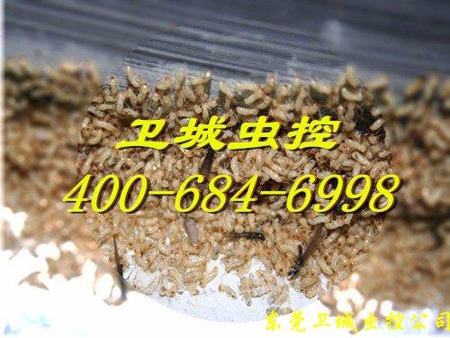 广州联和白蚁防治公司,联和白蚁公司,联和灭白蚁公司