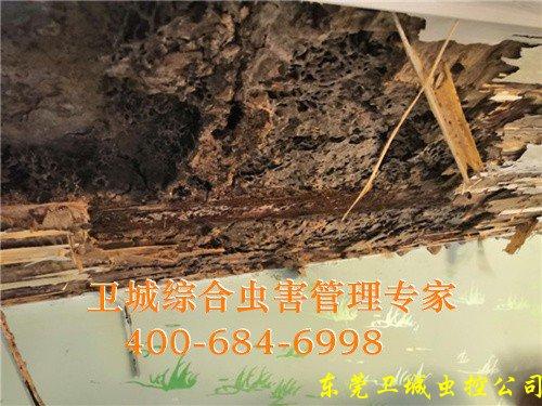 白云区防治白蚁,荔湾区除四害,海珠区杀虫公司