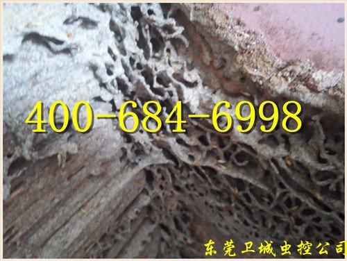 广州白蚁防治公司,黄埔、萝岗区灭白蚁