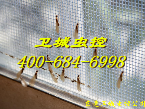 广州长洲白蚁防治所,长洲白蚁防治站,长洲灭治白蚁资质单位