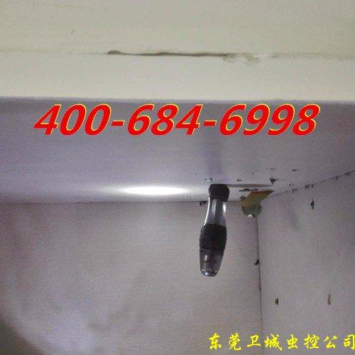 深圳龙岗白蚁防治公司,龙岗灭白蚁公司,龙岗白蚁公司