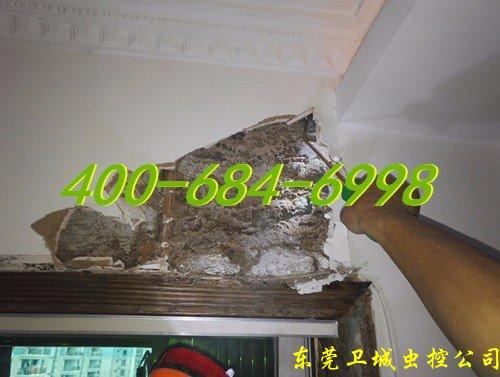 深圳光明新区白蚁防治,光明新区灭白蚁,光明新区防治白蚁