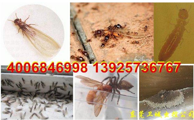 深圳沙井白蚁防中心,沙井防治白蚁,沙井灭白蚁