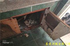 深圳宝安区白蚁防治中心,宝安白蚁防治站经验丰富有责任心