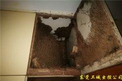 深圳龙华白蚁防治站|{龙华灭除白蚁}免除蚁患破坏-龙华白蚁公司